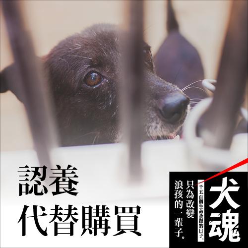 台湾对於流浪动物的管理政策