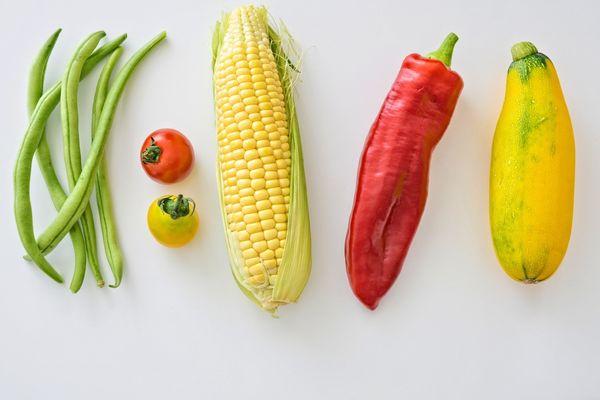 agriculture-beans-corn-142520.jpg