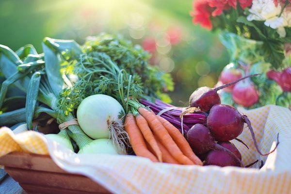 好營養要靠好食物,吃對東西很重要!